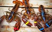 Life Span of Lobsters