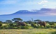 Biotic and Abiotic Factors in the Savanna Grassland