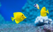 5 Characteristics That All Fish Have in Common