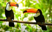 Plants & Animals Found in Tropical Regions