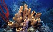 Types of Sea Sponges