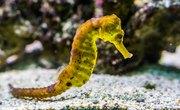 What Eats Seahorses?
