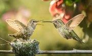 How to Make a Hummingbird Nest