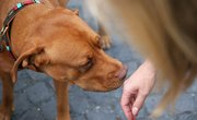 How to Hide Your Scent From Dogs