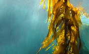 What Does Seaweed Need to Live?