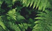 Characteristics of Seedless Vascular Plants