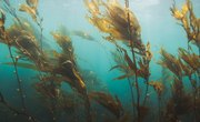 What Plants Grow in the Indian Ocean?