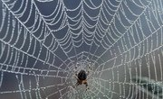 How Does a Spider Spin It's Web?