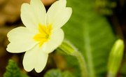 Flowers & Plants Found in Temperate Forests