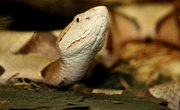 Reptiles of Indiana