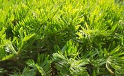 10 Facts on Photosynthesis