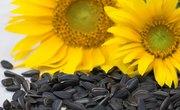 What Animals Eat Sunflower Seeds?
