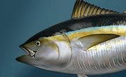 How Fish Maintain Homeostasis in Different Water Temperatures