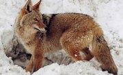 How to Identify Wild Animal Paw Prints