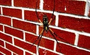 How to Make Fun Homemade Spider Traps