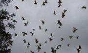 Types of Birds That Form Large Flocks Together