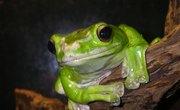 Rainforest Ecosystem School Projects