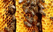 How to Remove Bee Propolis Stains