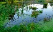 How to Make a Pond Diorama