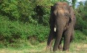 The Natural Habitat of Elephants