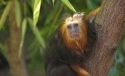 Why Do Monkeys Live in the Rainforest?