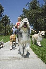 Una buena oportunidad de negocio en casa para mujeres es trabajar como paseadora canina.
