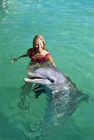 El entrenamiento de mamíferos marinos puede ser una carrera gratificante.