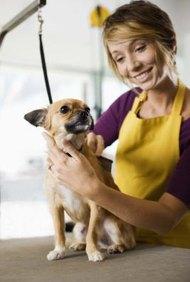 Establecer una tienda de mascotas te da la oportunidad de cuidar a los animales.
