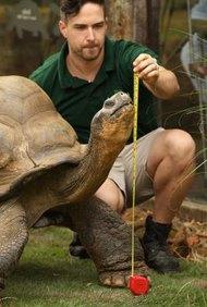 Los zoólogos que estudian las tortugas y otros reptiles son herpetólogos.