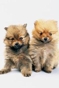 Muchos propietarios consideran a sus mascotas como parte de la familia y estarán felices de pagar para mimarlos.