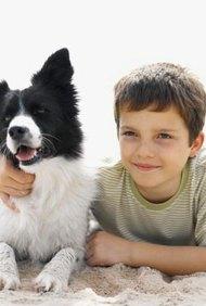Pensar en poner un crematorio para mascotas.