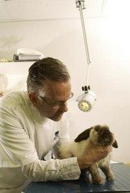 La mayoría de veterinarios trabajan en prácticas privadas cuidando mascotas.
