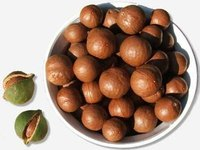 Shelled macadamia nuts