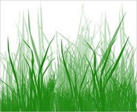 What Does Grass Need to Grow?