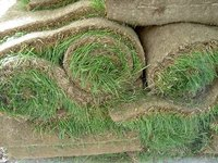 How Is Sod Made?