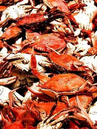 Cook Hard Shell Crabs