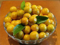 What Is a Calamondin?