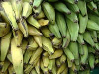 Types of Plantain Bananas