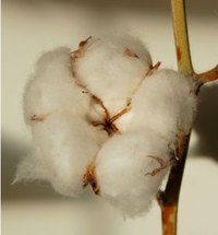 Uses of Cotton Balls