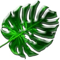 The Monstera deliciosa is a different-looking houseplant with cut leaves.