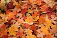 Service fees can be charged for leaf removal.