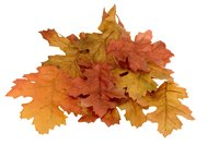 Dried fall leaves can be dried and preserved for year round decorations.