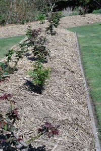 Mulch insulates and protects the plant roots it surrounds.