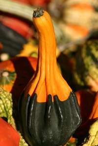 Preserved gourds are used for both functional and decorative purposes.