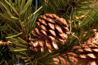 Dry pine cones in the oven