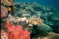 Coral reefs are found in oceans.