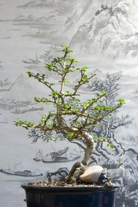 An inexpensive version of the dwarfed bonsai tree can be made with wire and beads.