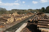 Trees harvested for lumber are stored at sawmills for processing.