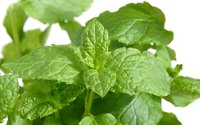 Mint offers a symbol of hospitality and is commonly used in the most fragrant of potpourris.