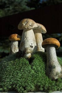 Mushrooms need moisture and warmth to grow.